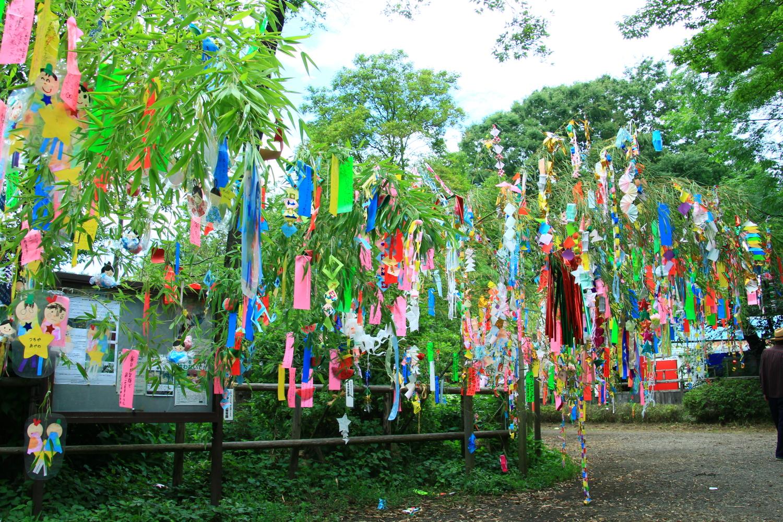 石神井公園の七夕祭り とってお...