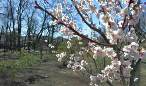 西本村憩いの森